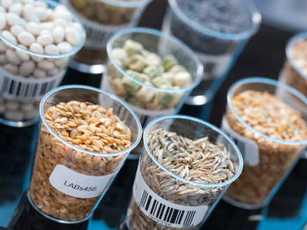 A ogni cibo la sua impronta digitale: il progetto del BfR per combattere frodi e adulterazioni alimentari