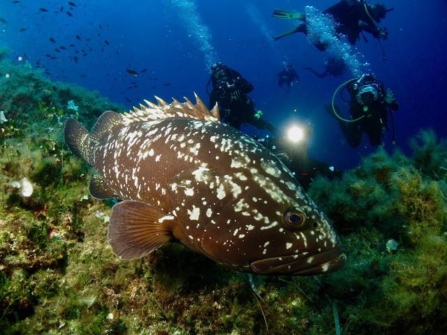 La petizione per istituire l'Area Marina Protetta dell'Arcipelago Toscano, in poche ore è già un successo (VIDEO)