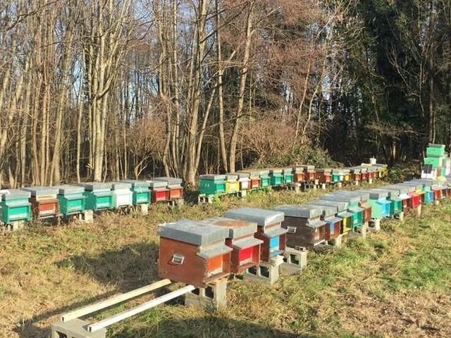 Devastati 17 alveari, migliaia di api uccise per dispetto
