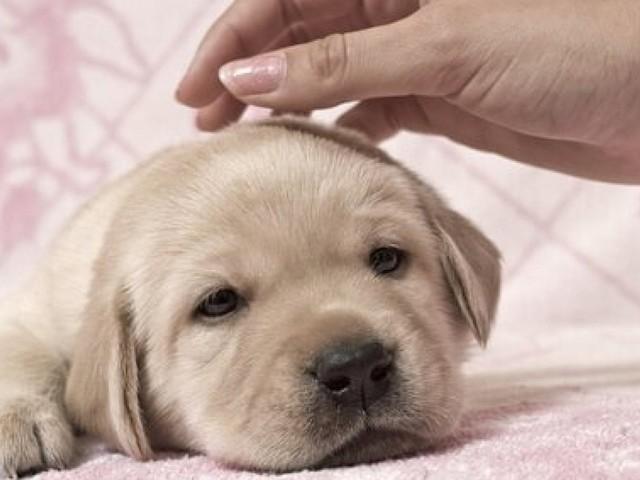 Mazara, sparisce un cane: torna con una zampa mozzata