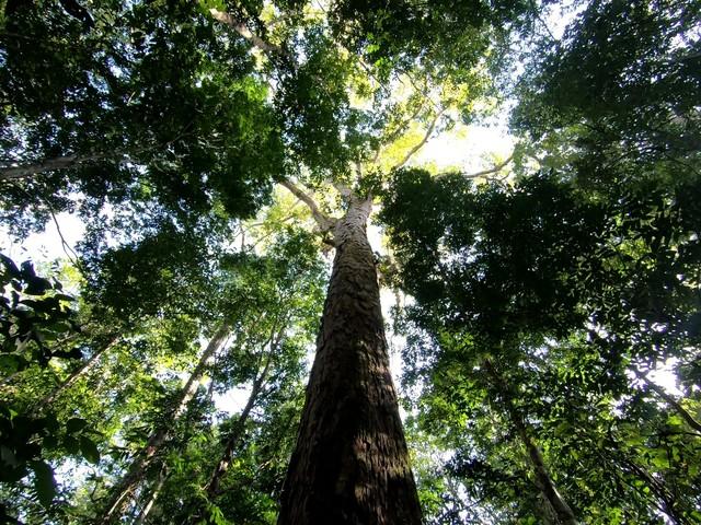 I giganti nascosti dell'Amazzonia (VIDEO e FOTOGALLERY)