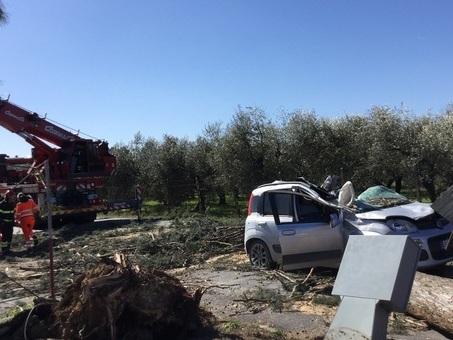Guidonia, alberi a rischio crollo: la Municipale ordina la chiusura di quattro strade