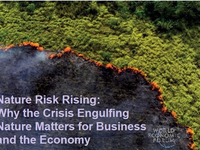 World economic forum: aumentano i rischi per natura ed economia
