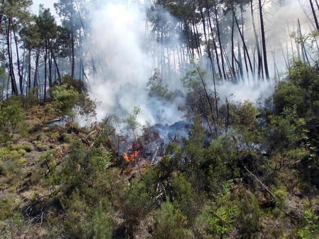 Incendia bosco, ma viene scoperto: sperava di essere impiegato nelle successive operazioni di ripulitura