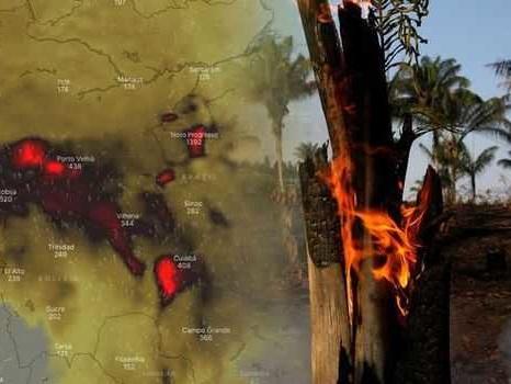 Vogliamo fermare la distruzione della Foresta Amazzonica? La soluzione è in mano nostra!