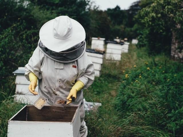 Le api, regine della biodiversità