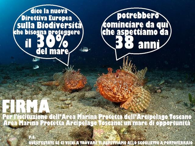 Goletta Verde: dopo 38 anni, è giunta l'ora di istituire l'Area marina protetta dell'Arcipelago Toscano