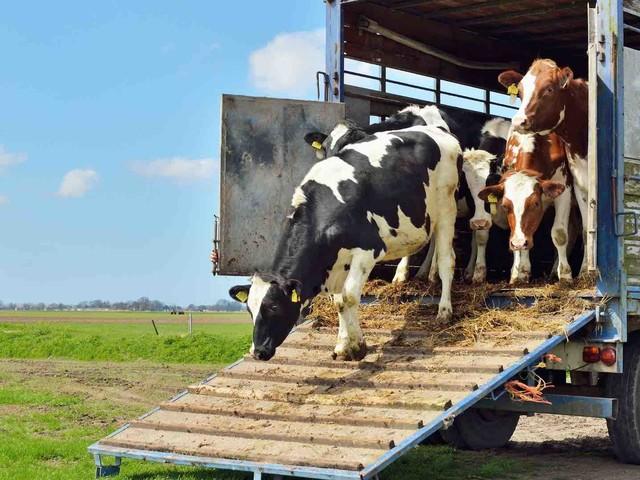 Confagricoltura, plauso al ministero: no al trasporto animale con più di 30°
