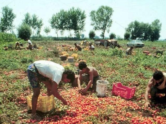 Più tutele dall'Inps per i lavoratori agricoli siciliani, esultano i sindacati