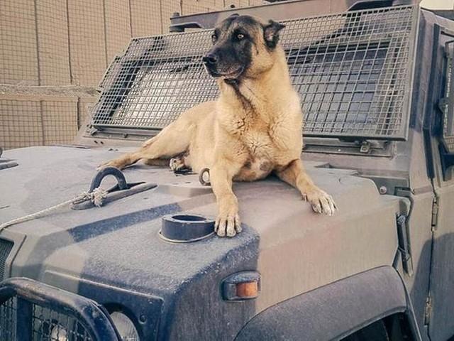 """L'appello della Difesa: date assistenza veterinaria per i """"cani con stellette"""" a fine servizio"""
