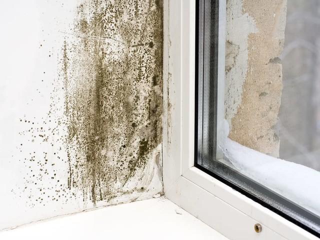 Muffa: come eliminarla dalle pareti di casa, con i rimedi naturali e senza candeggina