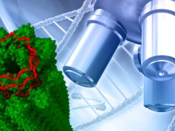 """ENEA: sulla Nature la """"fotografia"""" molecolare dei virus"""