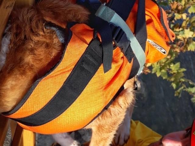 Buddy salvato dalle acque: intervengono i pompieri per salvare il cane dal Po