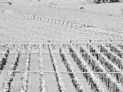 Maltempo, siccità e gelo: a rischio produzione di fieno