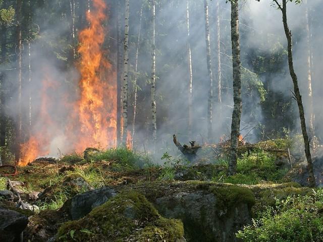 Incendi in Sicilia e Calabria: non è una guerra, è una mattanza di ambiente, legalità e risorse