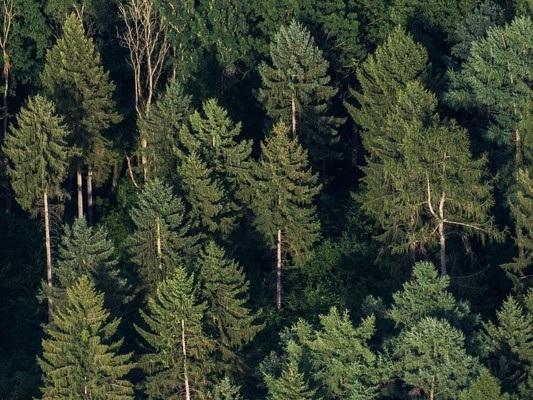 La sfida italiana alla deforestazione