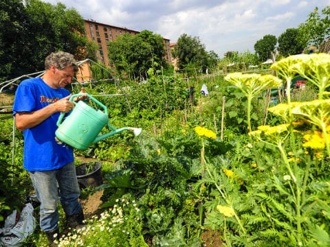 Come fare un orto urbano, vicino casa. Piante, contenitori e terreno da scegliere