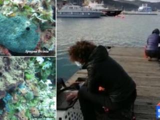 Gli effetti del riscaldamento climatico e le spugne dell'Elba alla Notte dei Ricercatori 2020