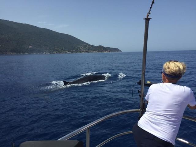 Plastic Busters: i cacciatori buoni di balene (e microplastica) nell'Arcipelago Toscano (VIDEO E FOTOGALLERY)