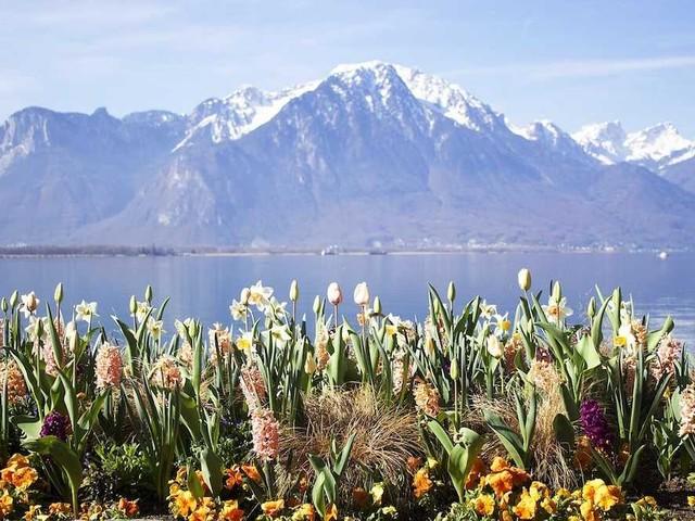 Vinci un viaggio in Svizzera per il Montreux Jazz Festival