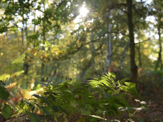 Cinque modi per vivere la magia di una foresta incantata