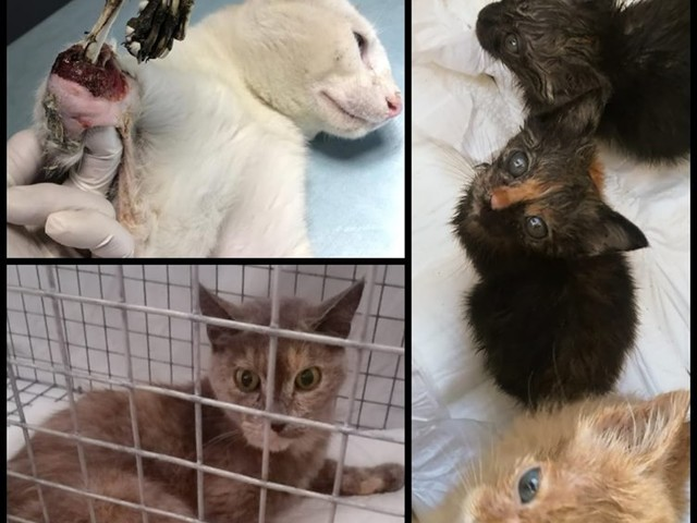 Gatti mutilati e uccisi con veleno. Orrore nel pavese