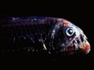 L'incredibile visione a colori dei pesci abissali