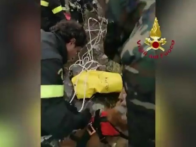 Salerno, cane cade in un dirupo: il salvataggio dei Vigili del fuoco a 20 metri di profondità