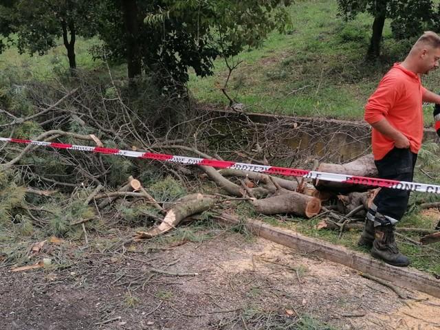 Maltempo Cerveteri: diverse decine di alberi caduti per la furia del vento