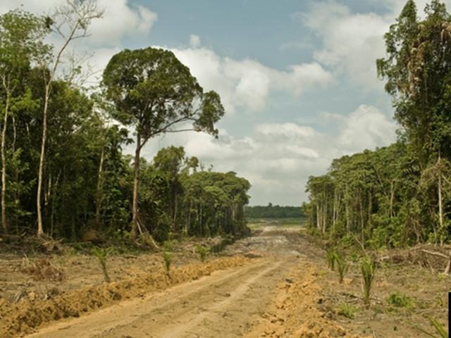 La carbon bomb: l'impatto climatico da perdita di foreste tropicali vergini è il 626% in più di quanto si credesse