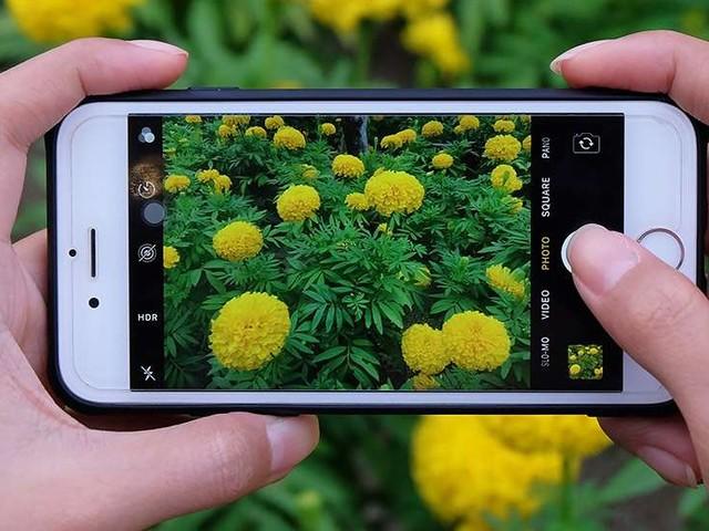 iPhone di nuovo fotocamera preferita su Flickr