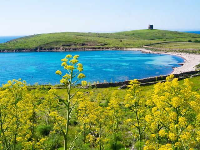 Nel Parco nazionale dell'Asinara al via la scuola di ecologia ed economia
