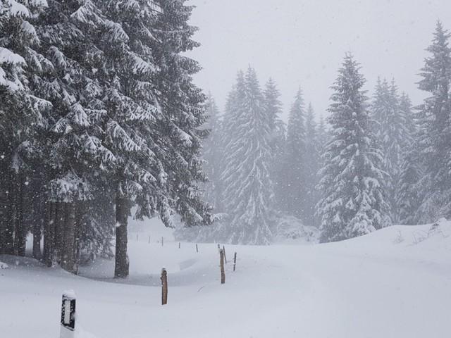 Arriva un anticipo d'inverno Domani neve da quota 1.200