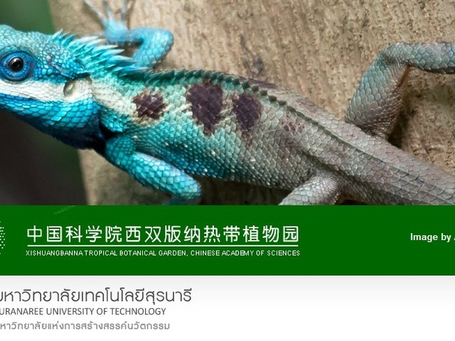Il 36% di tutte le specie di rettili viene venduto online, anche animali minacciati di estinzione