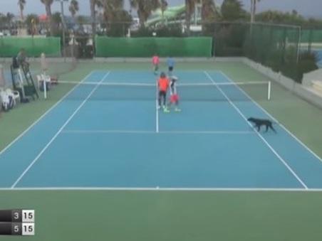 Tennis, cani invadono il campo: interrotto il match del doppio azzurro Becuzzi-Virgili