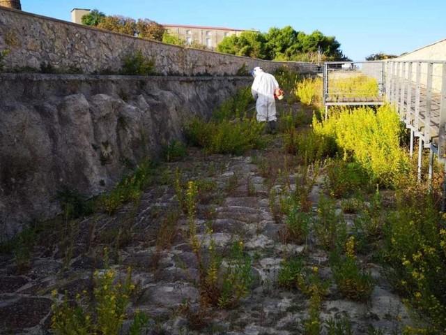 Ponte romano, via l'erba ma il restauro non decolla