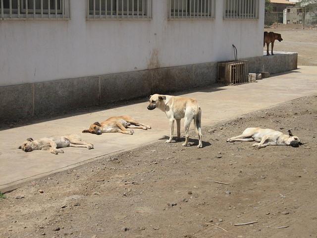 """Choc in India, bimbo appena nato """"sbranato da cani randagi"""""""
