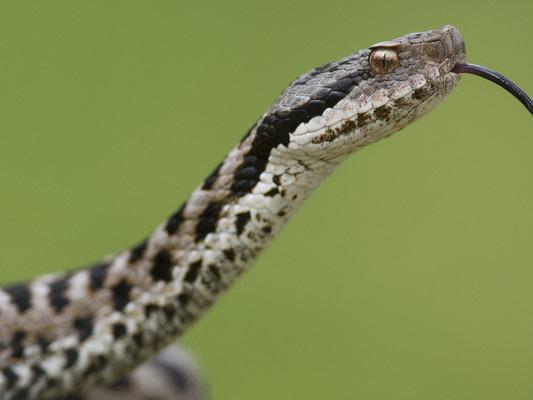 La strategia mondiale contro i morsi da serpente