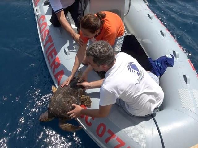 Goletta Verde festeggia i 30 anni della Area marina protetta delle Tremiti liberando una tartaruga