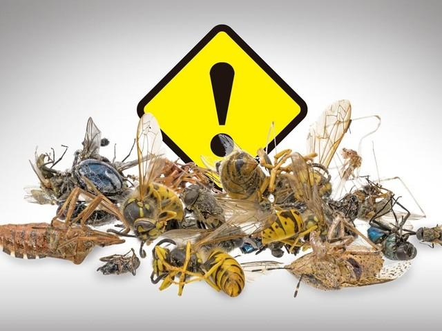 Allarme anche in America per il declino delle popolazioni di insetti