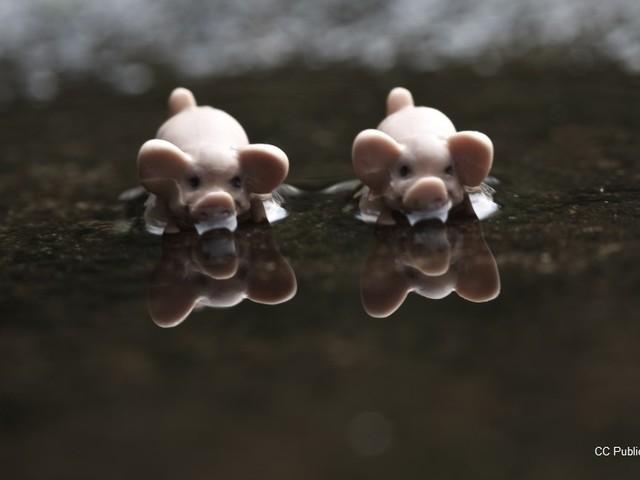 Spandimento selvaggio di liquami zootecnici, denuncia di Legambiente alla Commissione Ue