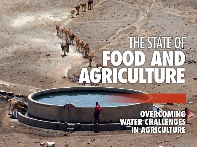 Rapporto SOFA 2020: ecco come vincere le sfide idriche nel settore agricolo
