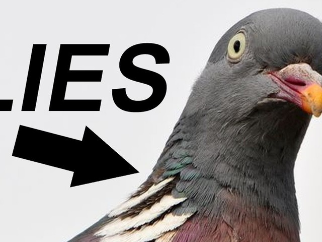 """""""Gli uccelli non sono reali"""", quando il complotto diventa satira e marketing"""