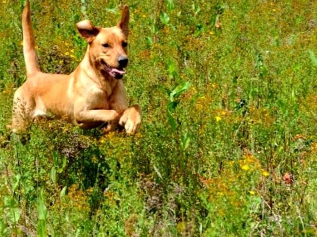 Porta il cane dal veterinario, ma non è suo: 36enne denunciato per furto di animale domestico