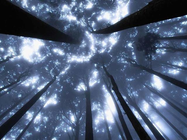 Il mistero del genoma umano: tracce di organismi primordiali