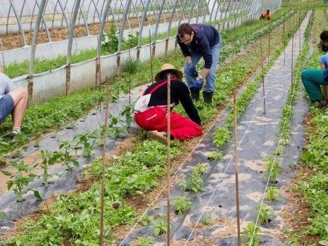 Agrumeti danneggiati e innovazione, 50 milioni per gli agricoltori siciliani