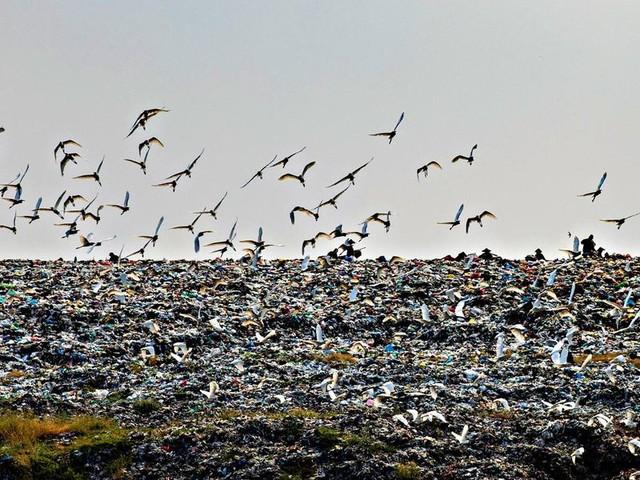 L'inganno ecologico