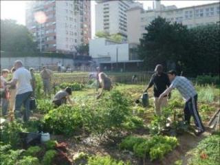 Pescara, sì del Consiglio a regolamento per orti urbani