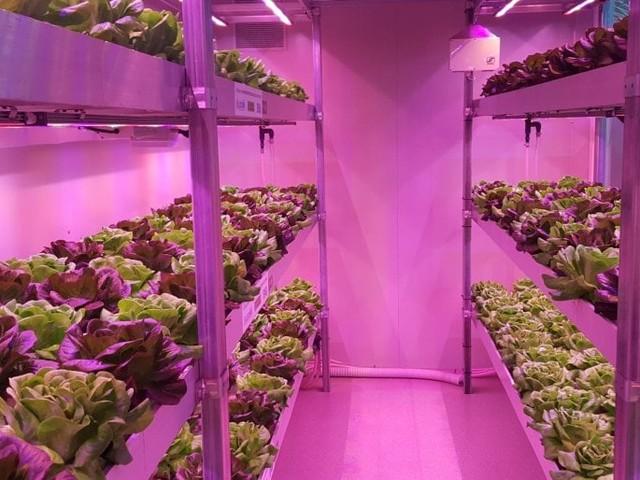 Nel capannone può crescere una serra. Ma solo se verticale