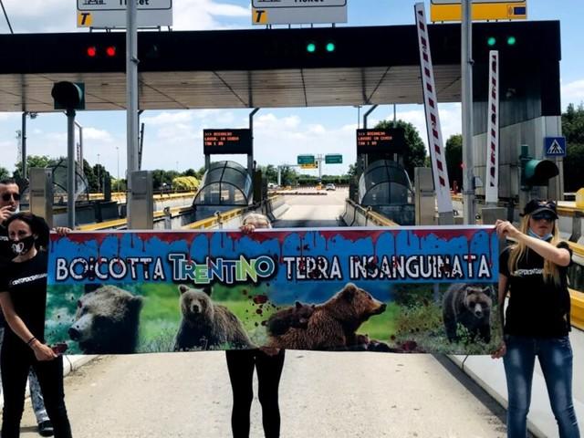 Abbattimento orsa, gli animalisti bloccano un casello dell'A22 per protesta. deputati Lega: «Normativa chiara, sorprendono dichiarazioni Ministro Costa»